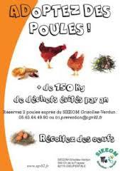 adoptez-des-poules2