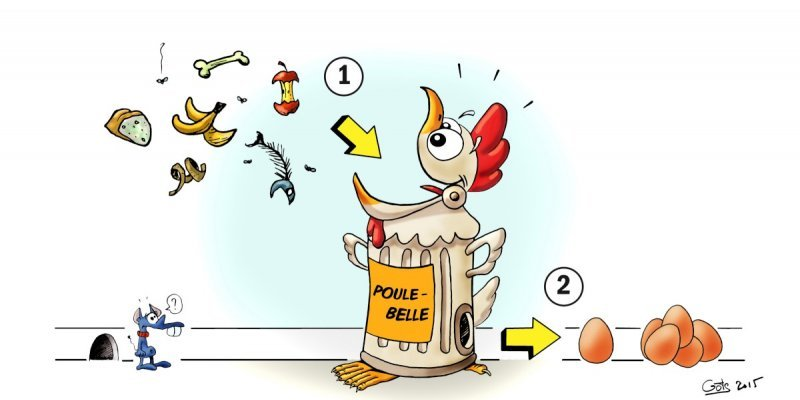 poules dechets et oeufs 2