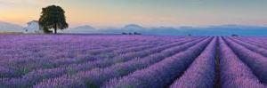paysage lavande