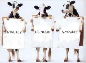Vaches go vegan